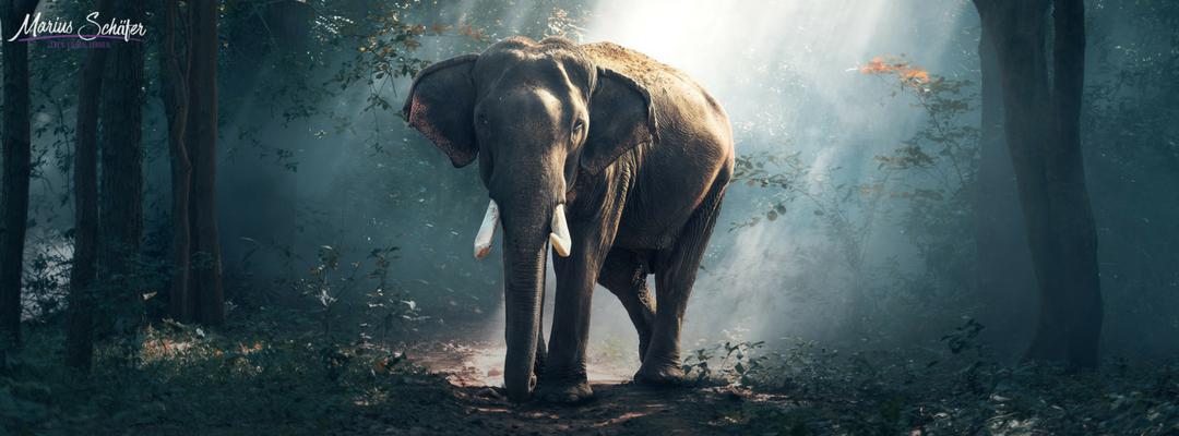Die Elefantenfesseln